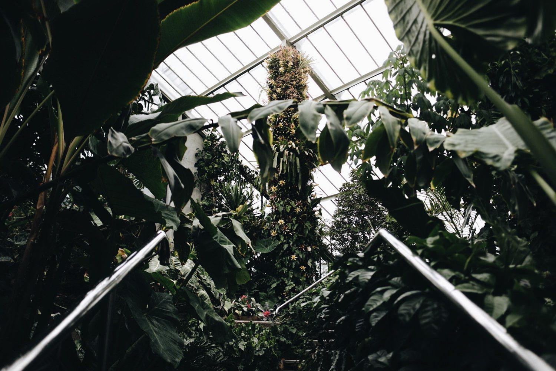 Kew Gardens family photography | London wedding photographers SP